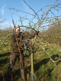 Obstbaumschnitt©Grundschule Landesbergen